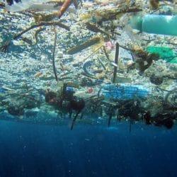 Il était une fois … La nocivité des pailles en plastique